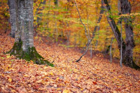 colorful tree in the autumn forest background Stock Photo - 138476252