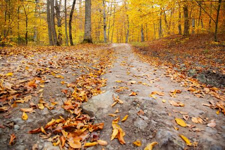 autumn beautiful road in the forest background