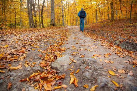 man traveler in beautiful autumn forest background Banco de Imagens