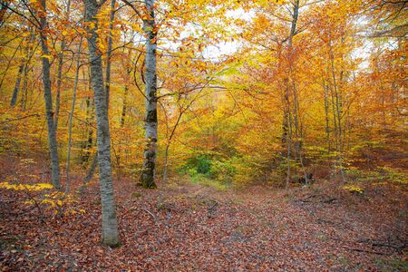 forest tree in the colorful autumn background