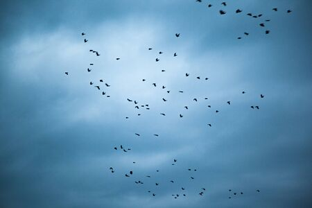 flying birds in the dark abstract sky background