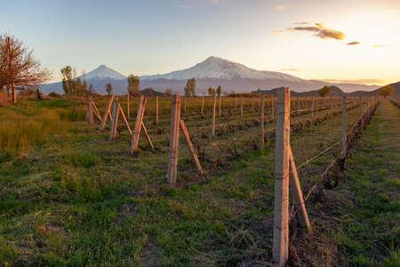 green field and Ararat mountain under sky