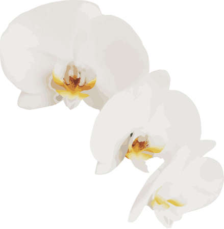 White orchid on a white background. Beautiful delicate light flower. Vector illustration for design