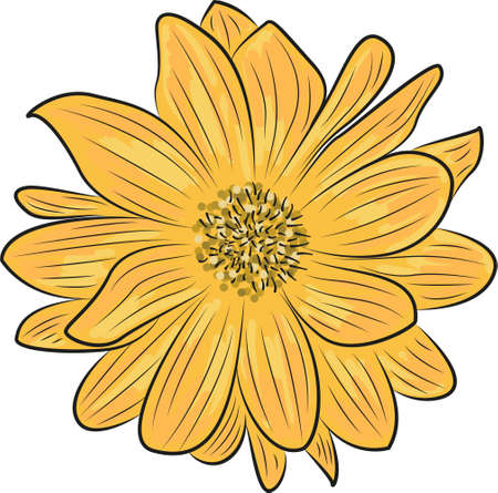 Vector bright yellow flower on a white background. Yellow chamomile close up.