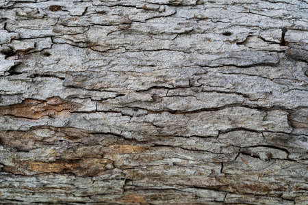 dry tree bark texture background.
