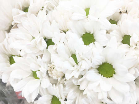 Bouquet of beautiful white asters. Stock Photo