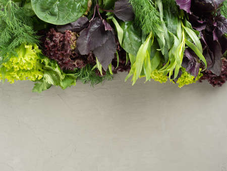 different edible fresh greens, herbs occupy half the frame on a gray background, copy space