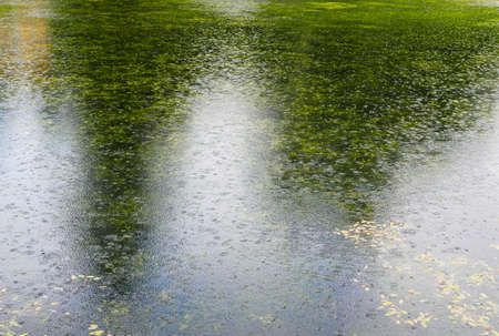 Pond surface during rain, with reflection of trees and sky. Water surface during rain. Rain drops are falling into the water. 免版税图像