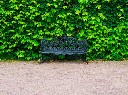 black wrought iron bench on the edge of a park path against the background of a green hedge in the center of the frame