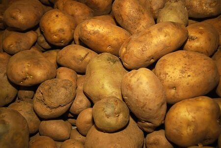 goodly: Goodly new potatoes, Bunch of Potatoes, selective focus Stock Photo