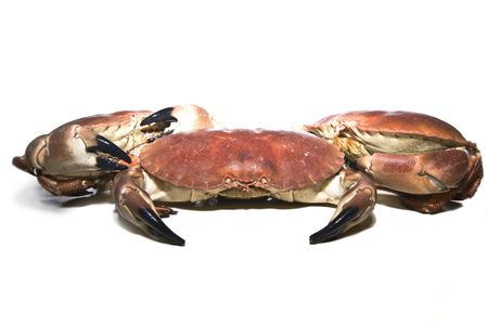 A sea crabs, isolated on a white background photo