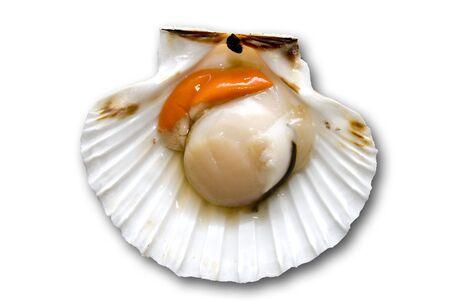 Closeup of a inside seashell (sea shell), scallop over white  background Stock Photo