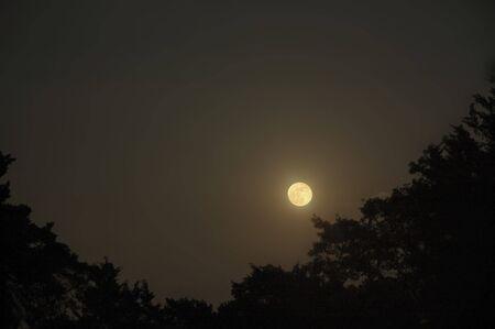Evening Moon photo