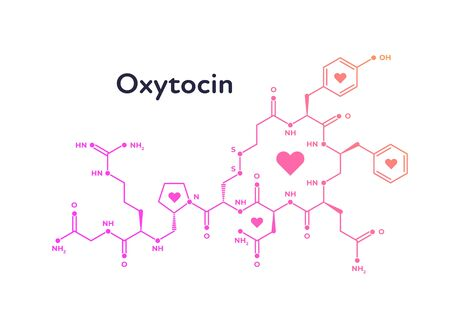 Vector hormones banner template. Oxytocin structure of pink color with heart symbol isolated on white background. Hormone assosiated with bond, care, love. Design for poster, education, presentation Ilustrace