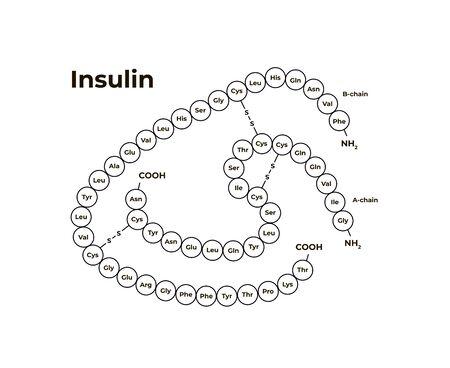 Plantilla de banner minimalista de hormonas vectoriales. Estructura de insulina aislada sobre fondo blanco. Asociado con diabetes, páncreas. Diseño para educación, presentación, póster. Ilustración de vector