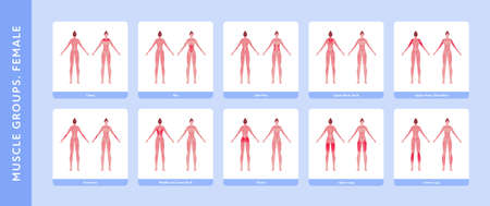Human muscle group and body anatomy. Vector flat color illustration set. Full length anatomic female model with highlight group. Front and back view. Design element for medicine, education and sport.