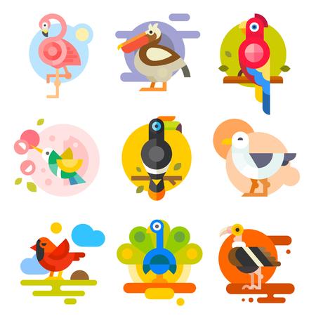 Diversi uccelli: pellicano, fenicottero, tucano, pappagalli, colibrì, aquila, gabbiano, pavone. Illustrazioni vettoriali piatte
