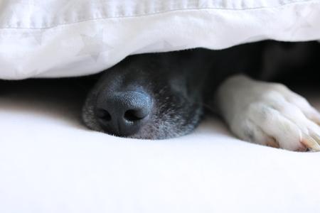 Hundenase