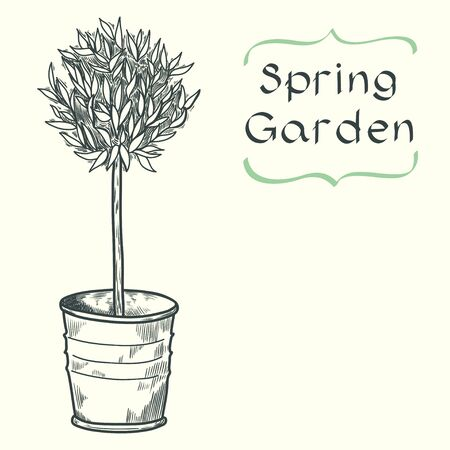 potting soil: Card template with potted tree drawn in a sketch style and place for the text. Hand drawn vintage style vector illustration.