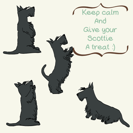begging: Sketches of four cute Scottish terriers in different poses. Hand drawn cartoon dogs begging for a treat.