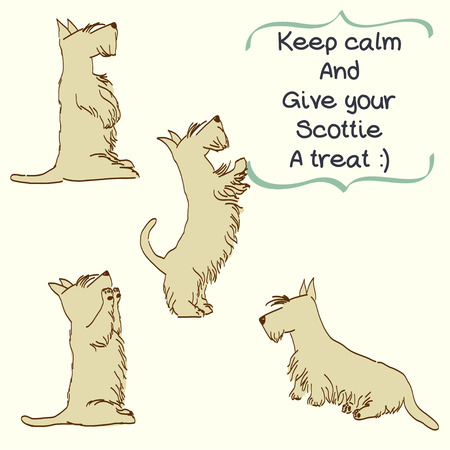 begging: Sketches of four cute wheaten Scottish terriers in different poses. Hand drawn cartoon dogs begging for a treat.