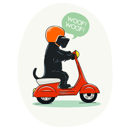 Funny illustration of a cute Scottish terrier riding old school red scooter. Hand drawn cartoon dog on a motorbike. Иллюстрация