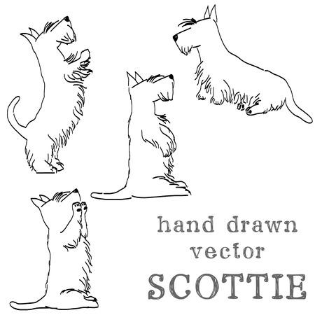 다른 포즈에서 네 귀여운 스코틀랜드 테리어의 스케치. 치료를 위해 구걸 손으로 그린 만화 개.
