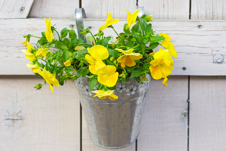 hanging flowers: Yellow flowers in bucket hanging at wall