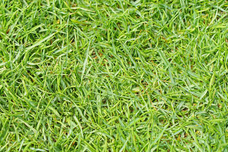 Green grass lawn close up texture background 스톡 콘텐츠