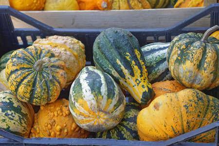 Decorative gourds pumpkins in crate at autumn