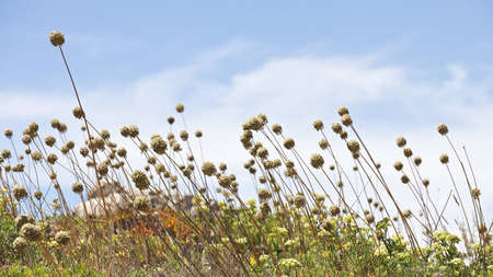16x9 wide screen aspect ration background - summer flowers, windy sunny weather. Stock Photo - 10173348