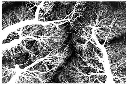 Black and white abstraction - invert trees Stock Photo