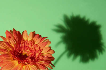 Orange flower with shadow on green background Stock Photo