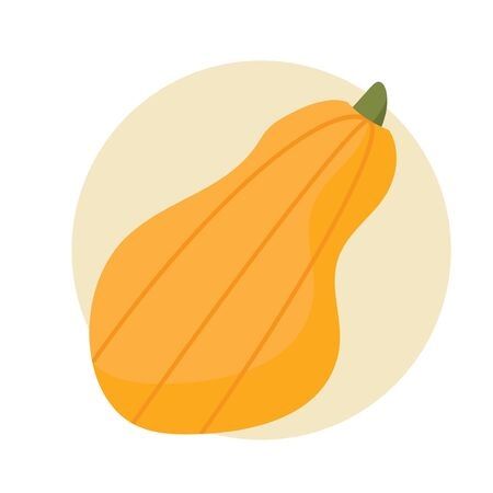 Vector illustration: orange long pumpkin isolated or butternut squash flat styled icon. Simple butternut squash.