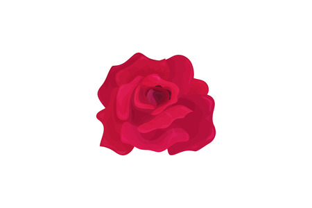 Vector illustration: Rose Flower bud isolated. Maroon Rose with leaflets made in a vintage style.