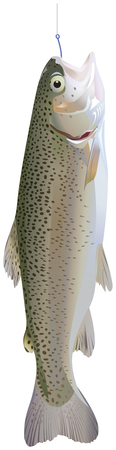 Trout hanging on a hook, on a white background.