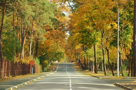 Autumn landscape with a road stretching into the distance and beautiful colored trees. 版權商用圖片