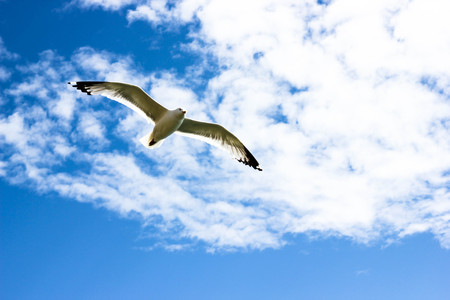 Blue sky with white clouds and flying seagull. Bird soaring high in the sky ofer the sea or ocean