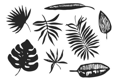 Collection of vector black ink hand drawn tropical leaves, exotic plants. Trendy sketch set of floral elements silhouettes for textile pattern design, greeting card decoration, logo, banner, wallpaper