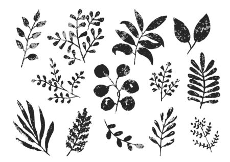 Collection of black and gray monochrome textured ink leaves and branches. Unique hand drawn set of tropical and daisy herbs for botanical background design, textile patterns, frames, greeting cards