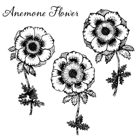 Collection of vector detailed black hand drawn sketch anemone flowers illustration. Beautiful floral symbols for greeting cards design, wedding and birthday decoration, sticker, logo Vectores