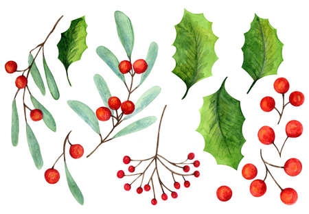 Set of bright watercolor mistletoe and holly berry illustrations. Collection of watercolour Christmas tree branches, leaves and berries for New Year greeting cards and banner decor