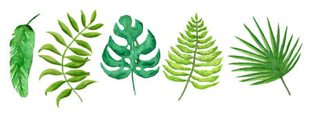 Collection of bright watercolor tropical leaves. Set of floral elements for botanical illustration design, frames, patterns, home decor