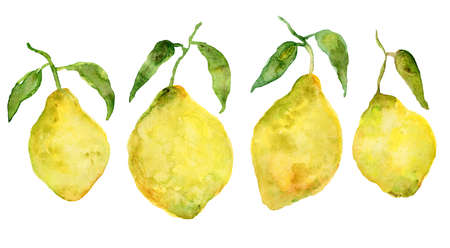Set of fresh sketch watercolor yellow lemons. Bright watercolour citrus fruits for icon design, stickers, package