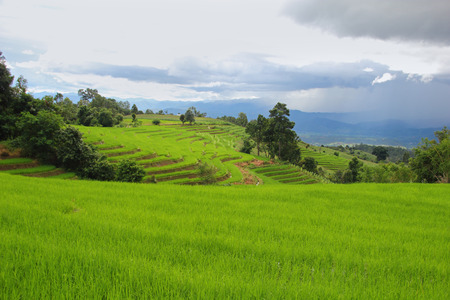 Green Rice Terraced Fields and sky after rain in Papongpieng, Chiang Mai,Thailand. Stock Photo
