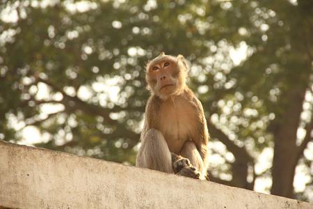 Monkey on a wall