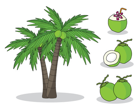 coconut on tree with white background. isolated doodle hand drawing.