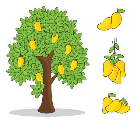 żółte mango na drzewie z białym tłem. na białym tle rysunek ręka.