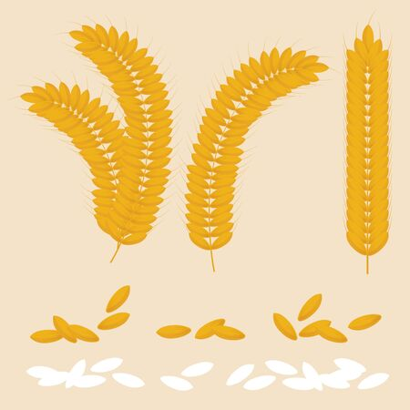 set vector rice and wheat