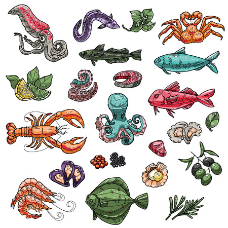 Big vector seafood set. Collection of isolated menu items for restaurants including tuna, crab, oyster, hake, octopus, shrimp etc. Standard-Bild - 115932017